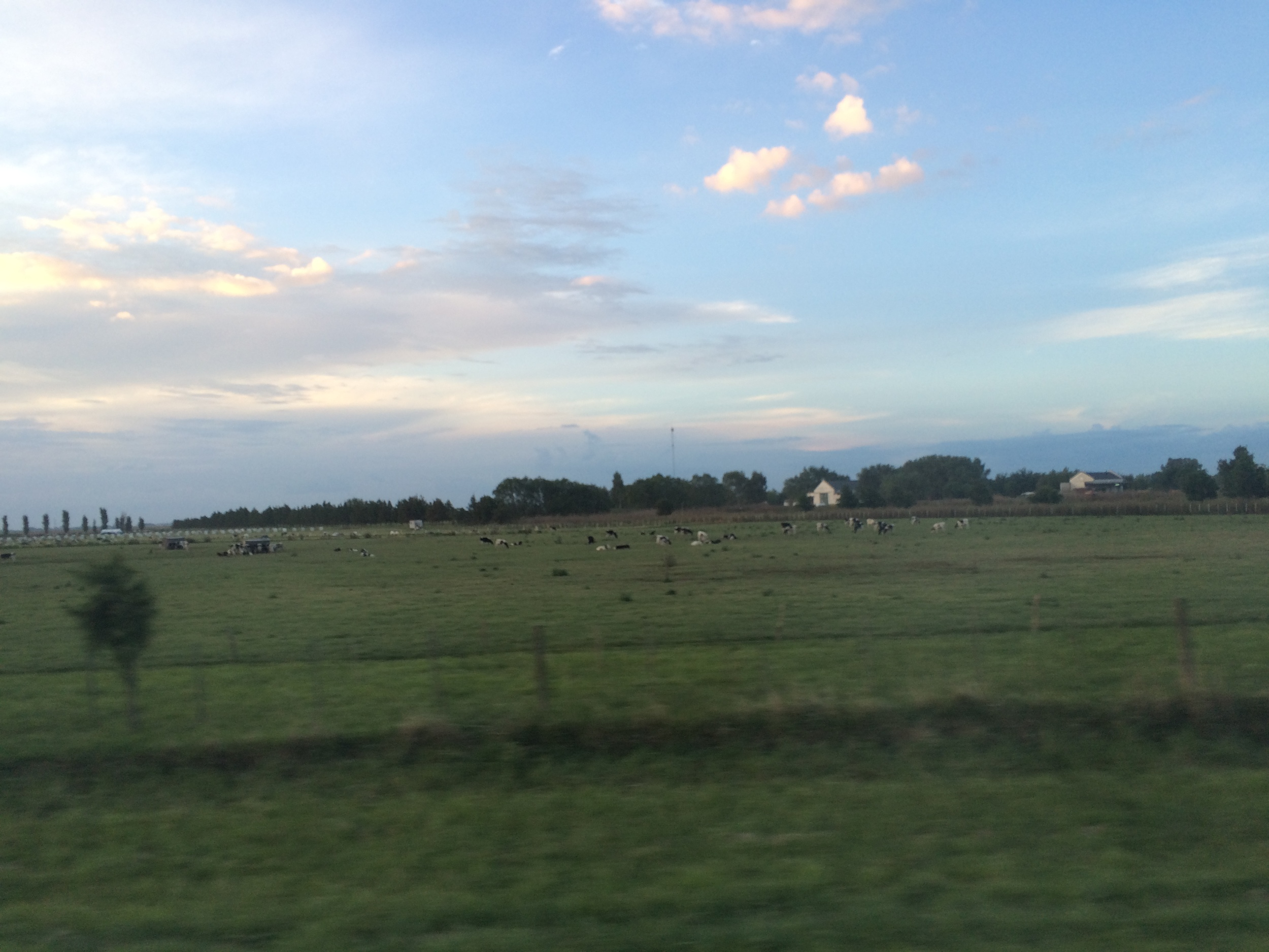 Dairy farms with hundreds of cows could be seen throughout the country side.
