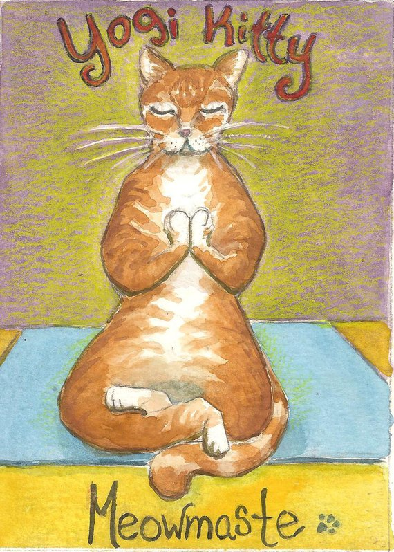 Yogi Kitty.jpg
