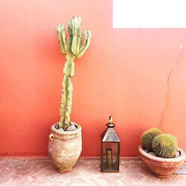 Cactus love 🌵 @bemarrakech #cactus #morocco #marrakech #moroccanriad #riad #moroccophotography #travelphotography #interiorstyle #roofterrace #marrakechrooftops