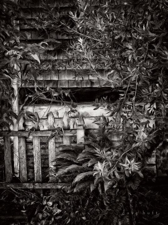 Backyard Fence BW.jpg