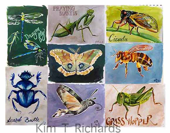 bug week sketchbook pages. Copyright 2015 Kim T. Richards. All Rights reserved.