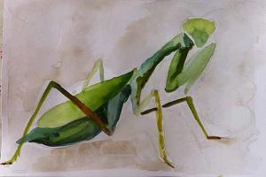 Praying mantis sketchbook page - phase one