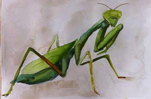 Praying mantis sketchbook page - phase two.