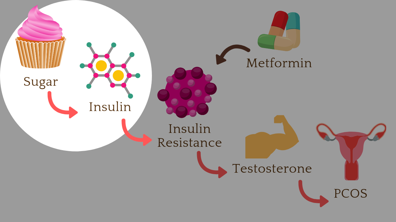 Addressing the root cause of 70% of PCOS cases, insulin resistance, reduces the need for exogenous medications like metformin.
