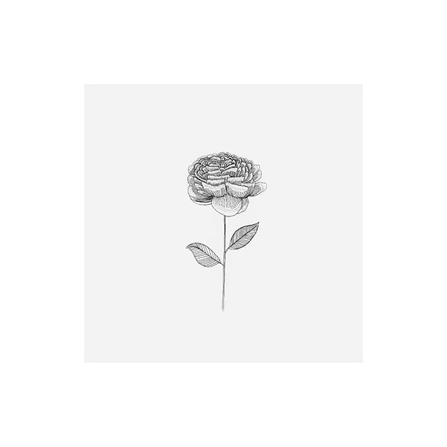 A flower, because it's lovely // pen on paper // #drawing #illustration #illustrator #art #artist #artistofinstagram #artistsoninstagram #inspo #artoftheday #makersgonnamake #makersmovement #design #minimal #minimalism #minimalist #minimalart #minimaldrawing #minimalillustration #minimaldesign #botanicaldrawing #botanical #botanicalillustration #flower #floral #flowerdrawing #floraldrawing #handdrawn #micronpen #micronpendrawing