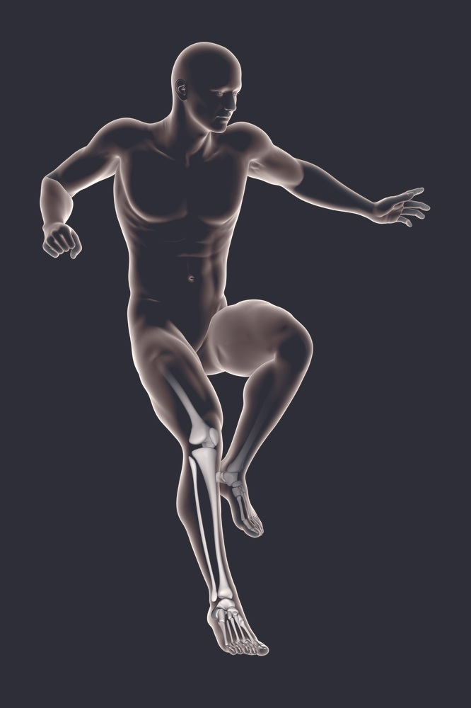 anatomy-3d-2e2e38.jpg