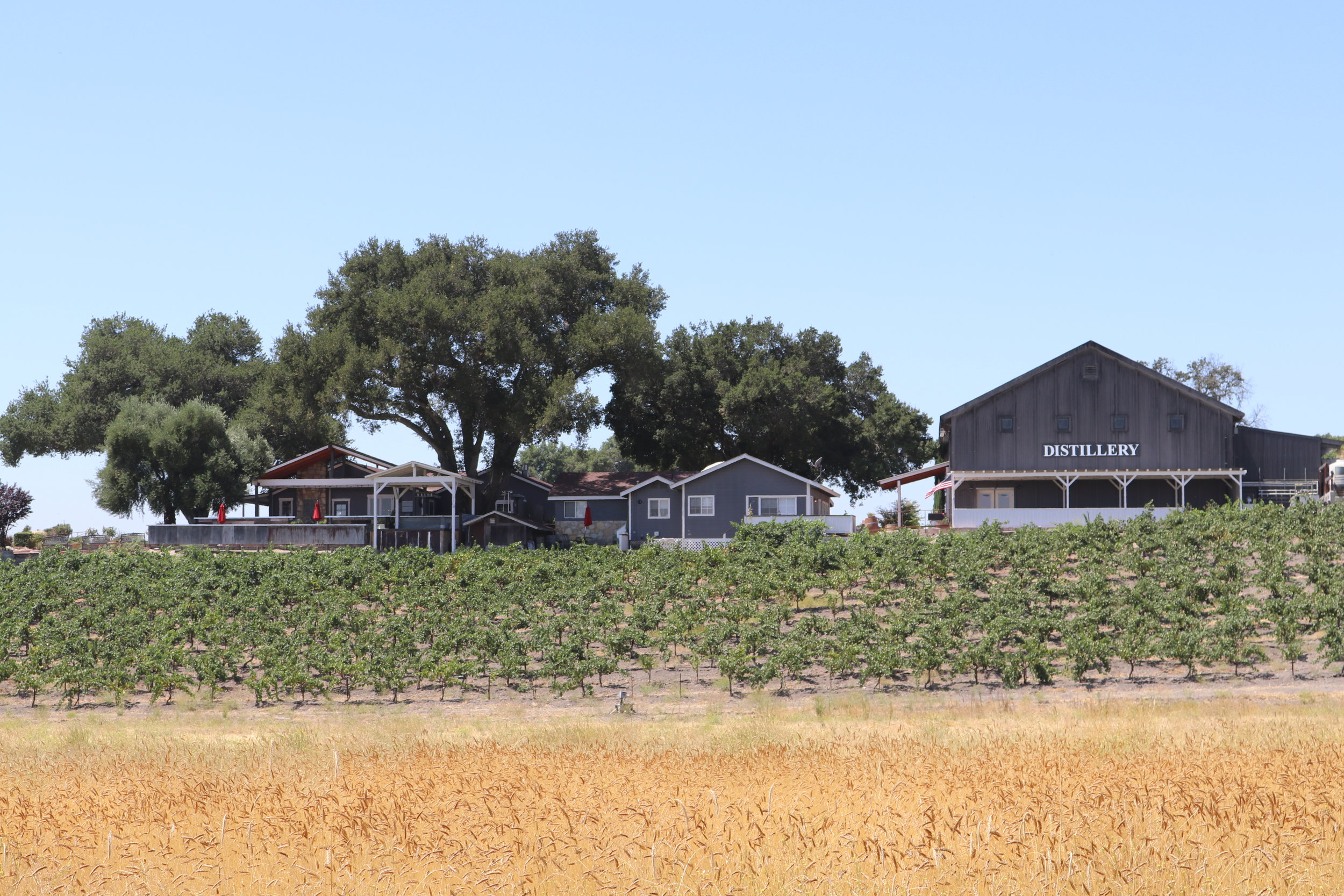 Distillery and winery property with rye grain and wine grapes planted below the tasting rooms and production facilities.