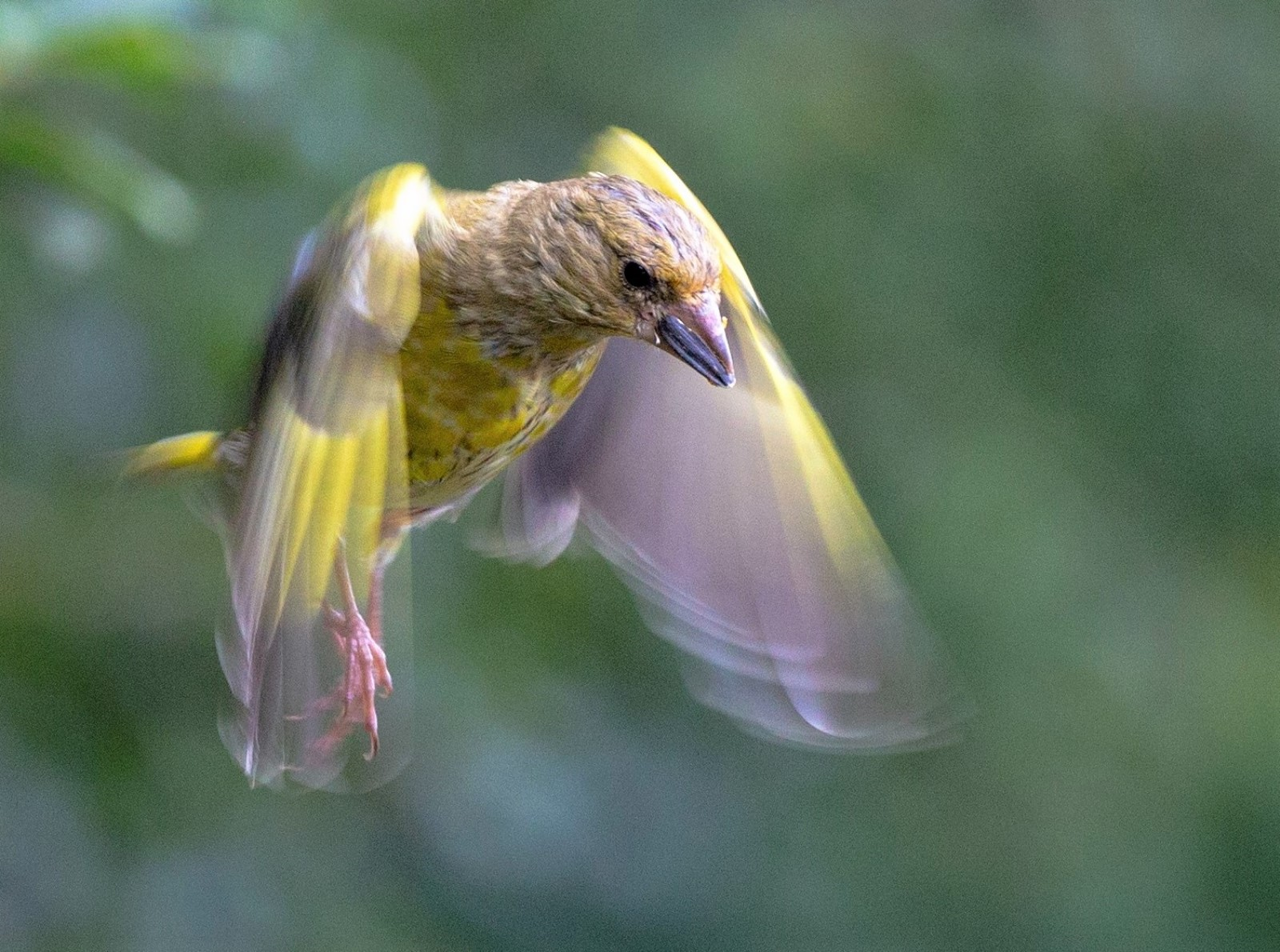 'Mystic Hovering' by Shannon James