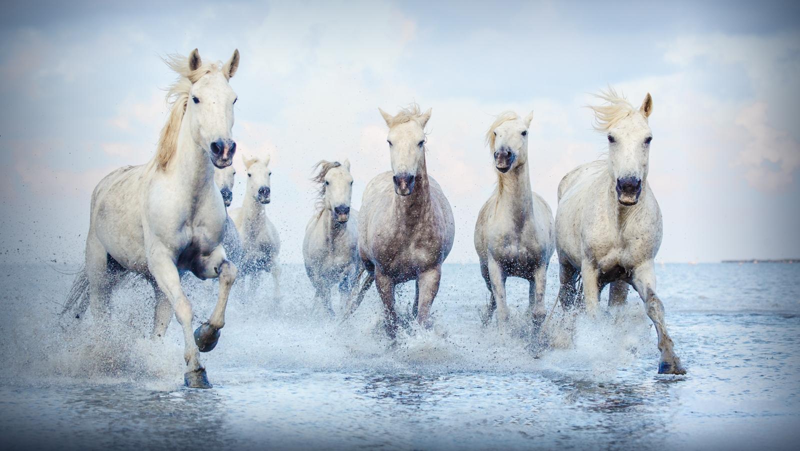 'Seahorses' by Sue Armes CPAGB ARPS