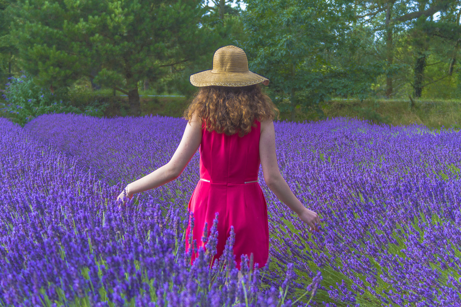 'Lavender Blue' by Terry Ward