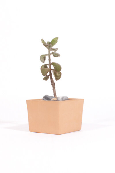 A218 CLAY SQUARE MEDIUM TABLE PLANTER