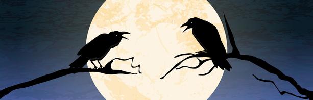 stockfresh_8595435_halloween-scary-crow-background_sizeXS.jpg