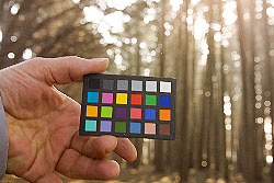 Digital Exposure and Color Balance for RAW will be explored in detail.