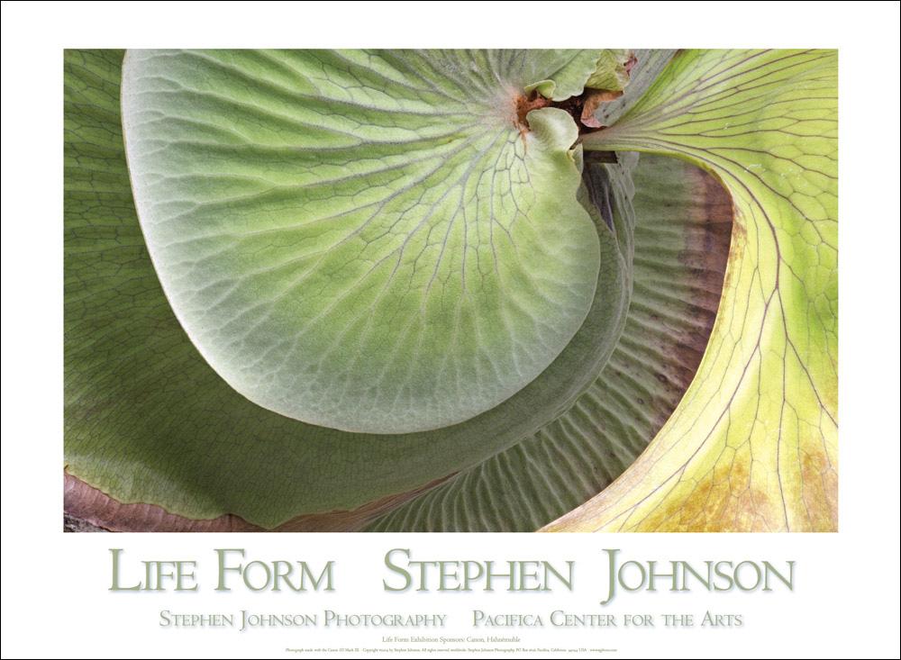 Life-Form-poster-1.jpg