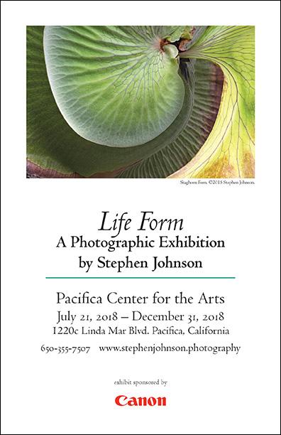 Life Form Online Gallery.  Invitation pdf.