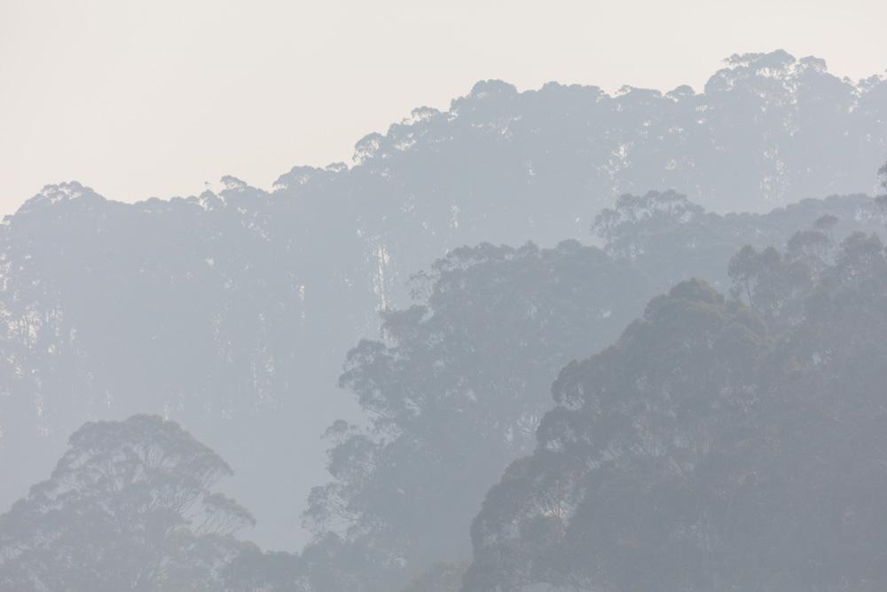 Smoky Trees on Montara Mountain. Pacifica, CA. 2018. Canon EOS 5DS R.