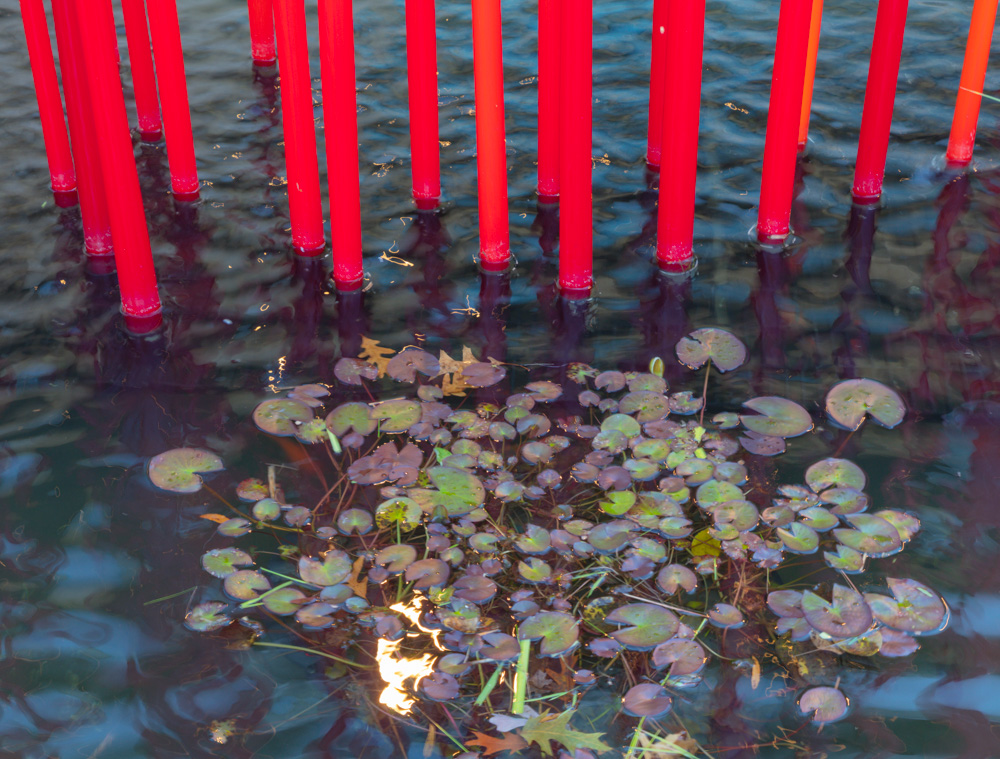 Lily Pads with Sculpture. Red Reeds. 2012. Dale Chihuly.  Virginia Museum of Fine Arts . 2018. Canon EOS 5DS R.