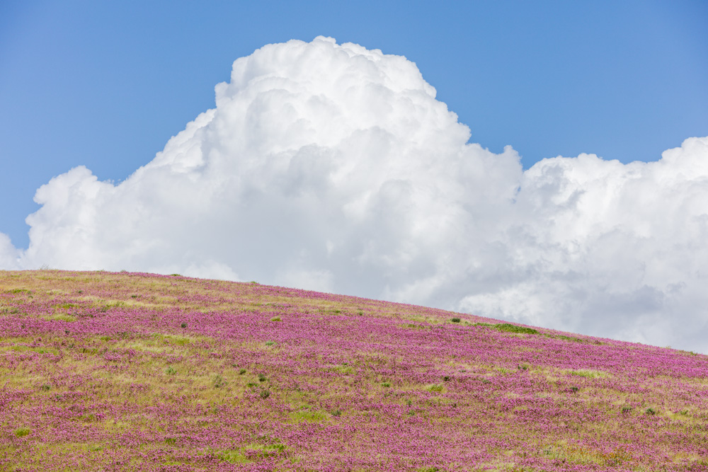 Wildflowers and Clouds near Carrizo Plain, CA 2019. Canon EOS 5DSr.