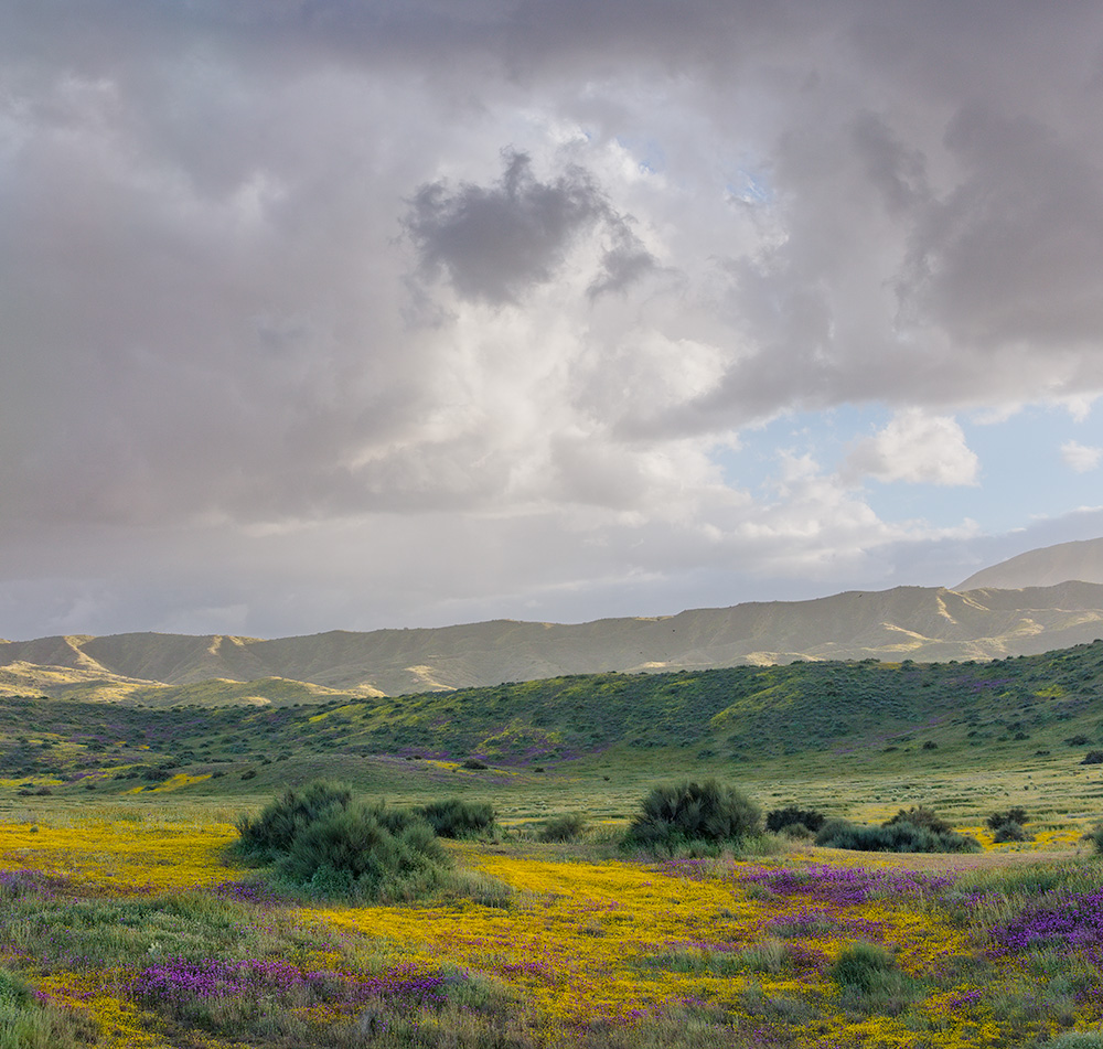 Wildflowers and Clouds over south Carrizo Plain. 2019. Canon EOS 5DSr.