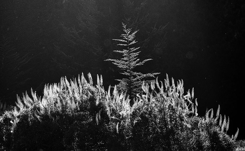 20181007_hardly-stickly_0637-BW.jpg