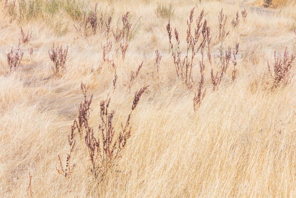 Grasses. Highway 152. San Luis Reservoir. CA. 2019. Canon EOS 5DS R.