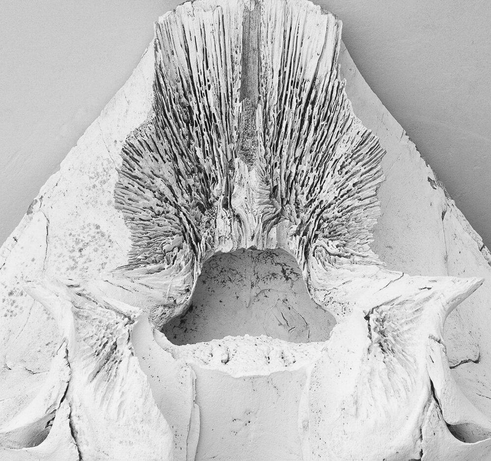 Whale Bone. Marine Mammal Center. 2019. Canon EOS 5DS R.
