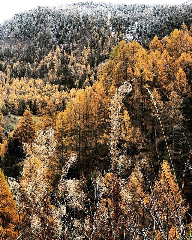 mister november is kind so far!  #autumnleaves #silence #calm #walks #love