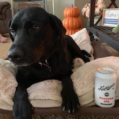Chaco - Boone's pup Chaco is a 9 year old Chocolate-black lab! He doesn't love having his photo taken but he does love our Zootown IPA!