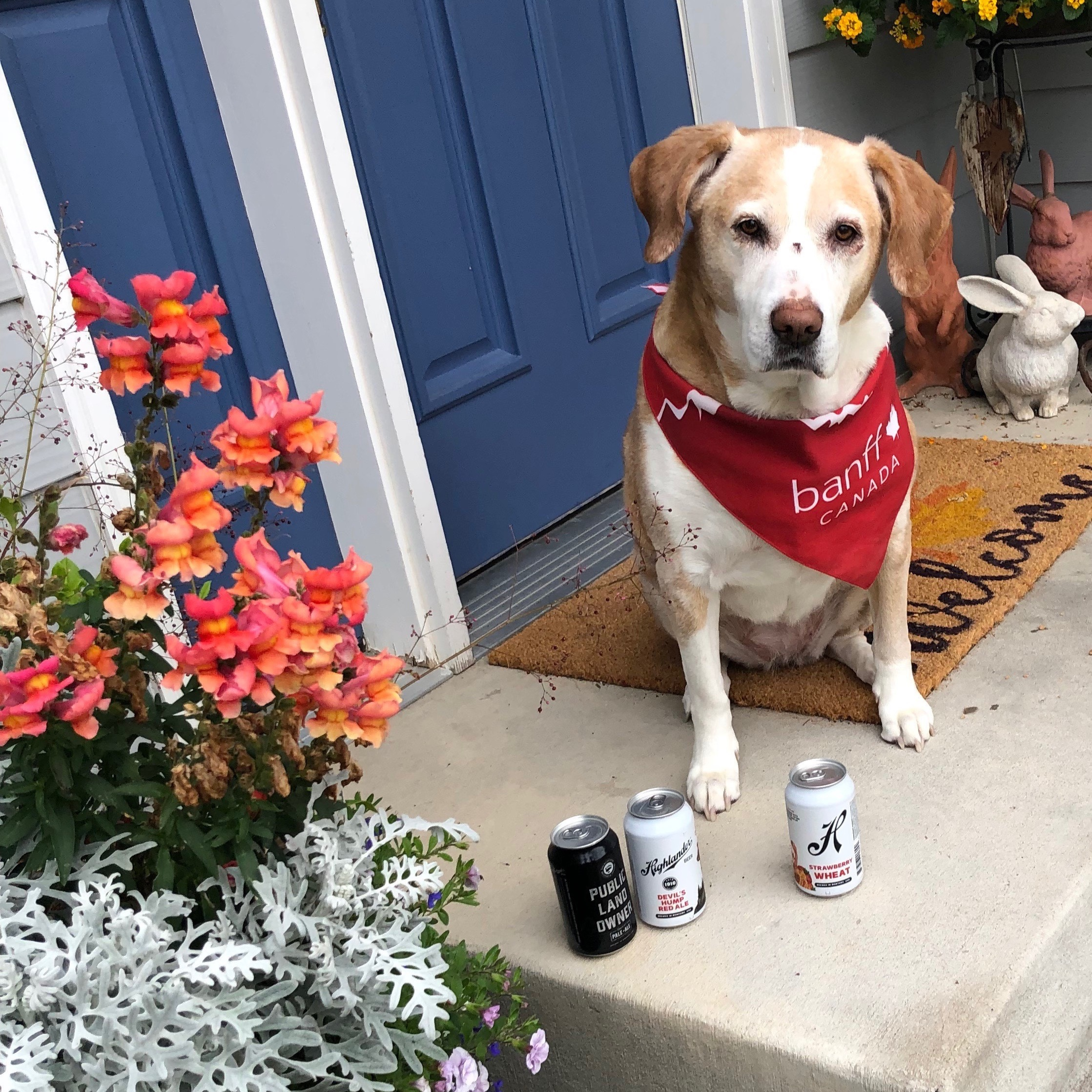 Holly - Cory's family got Holly for Christmas when he was 13 and even though she's an old girl now, she lights up like a puppy when he comes home! She is a big fan of Highlander's new cans and her favorites are the Public Land Owner, Devil's Hump and the Strawberry Wheat!