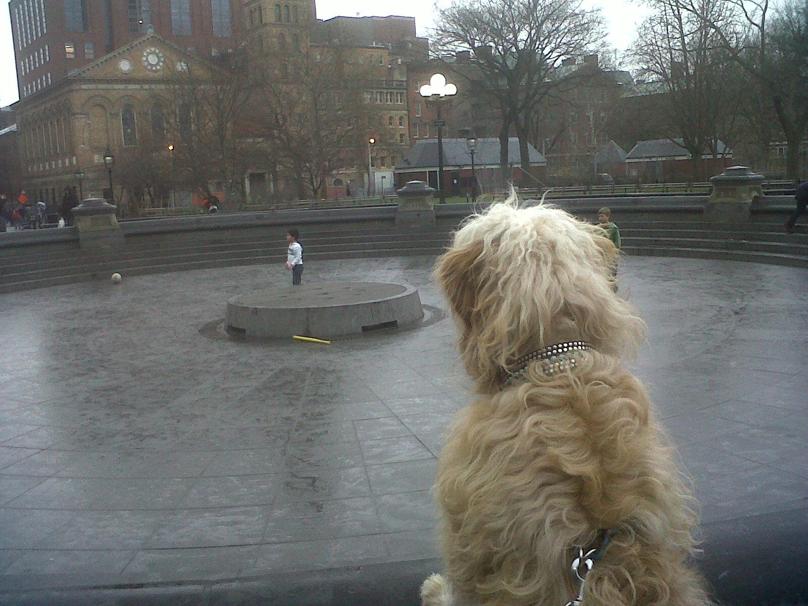 ollie from behind.jpg