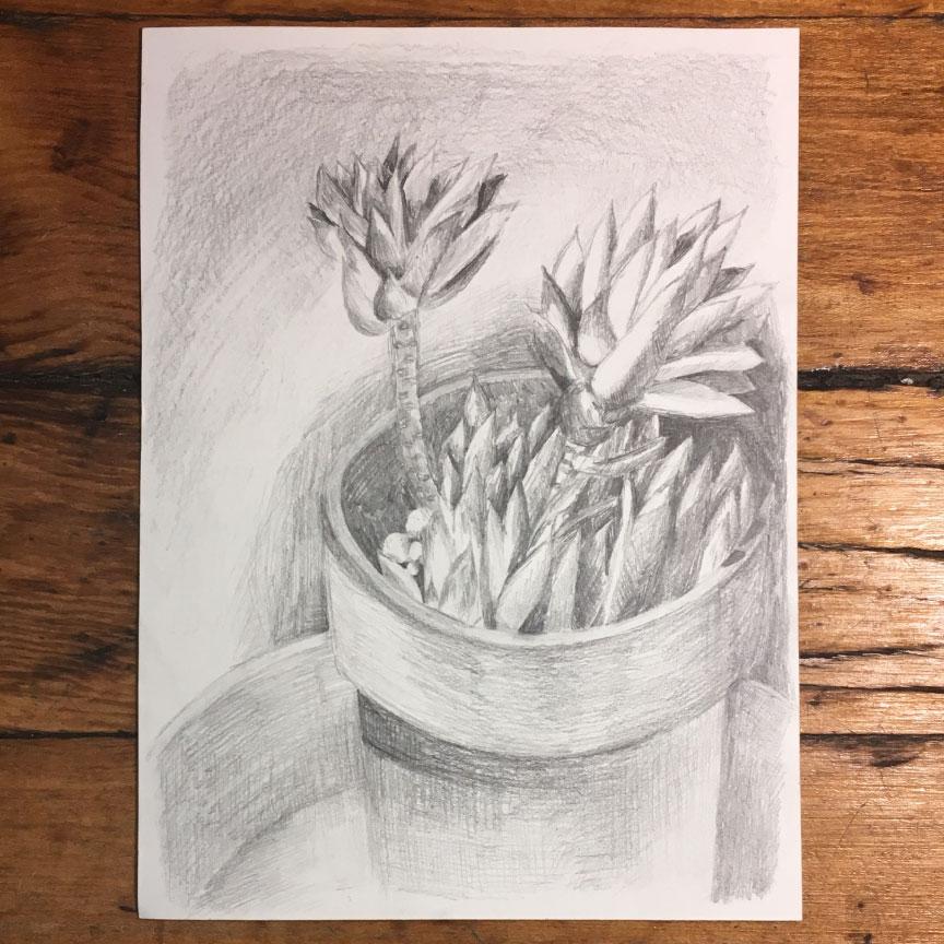 succulent2pencil.jpg