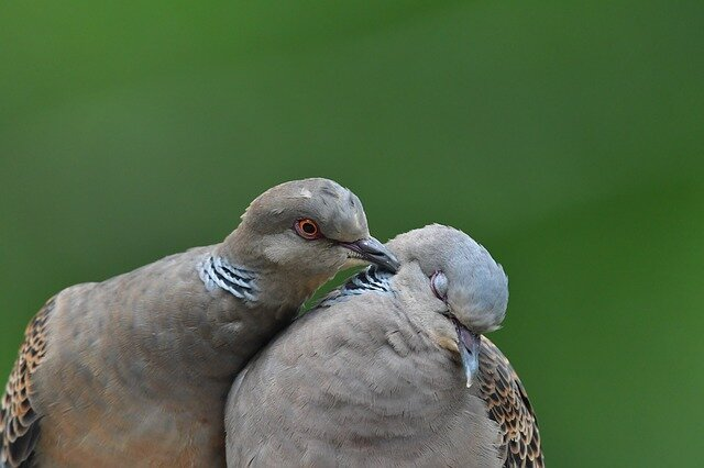 "Are you a ""Turtle Dove""? - Wanting a relationship doesn't mean you're crazy"