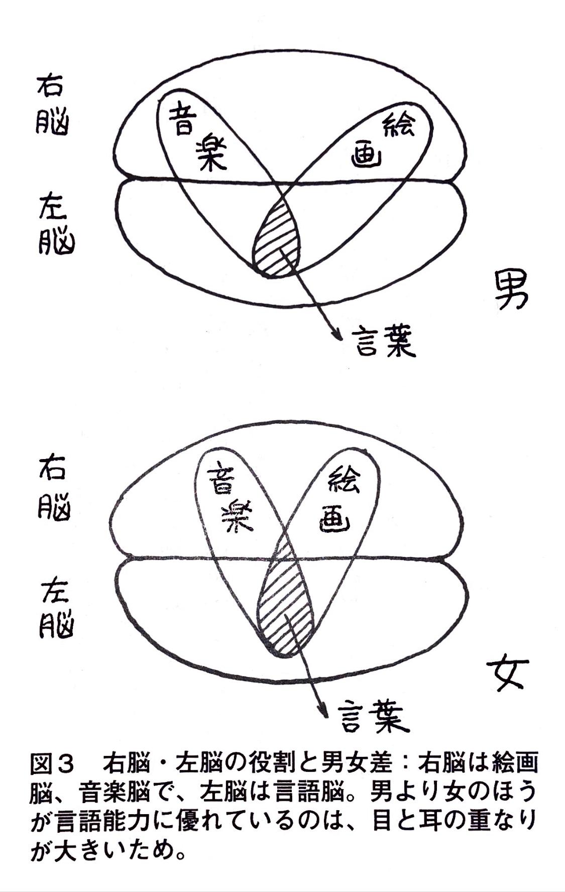 右脳・左脳の役割と男女差.jpg