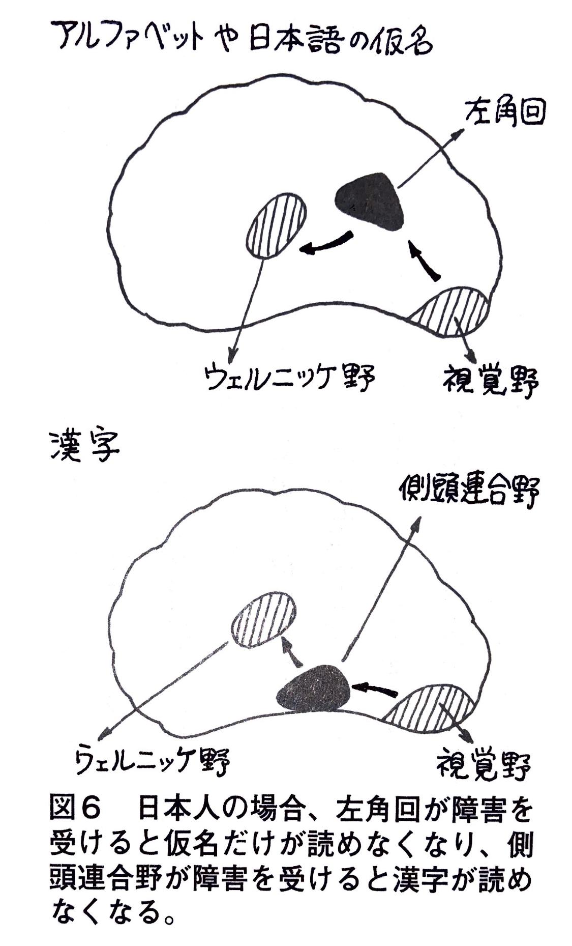アルファベットや日本語の仮名.jpg