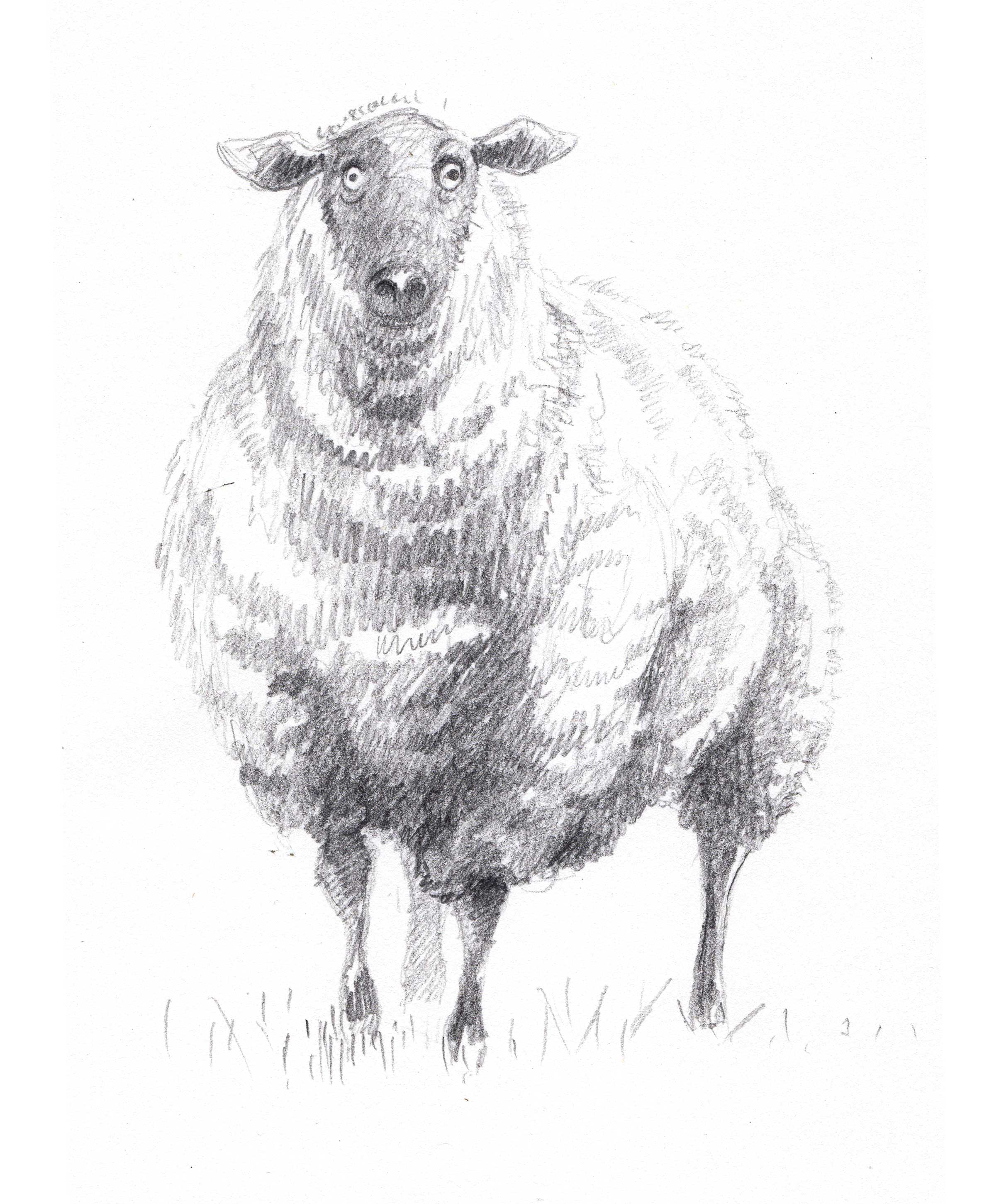 Sheep, Priscilla Tey, Illustration Art