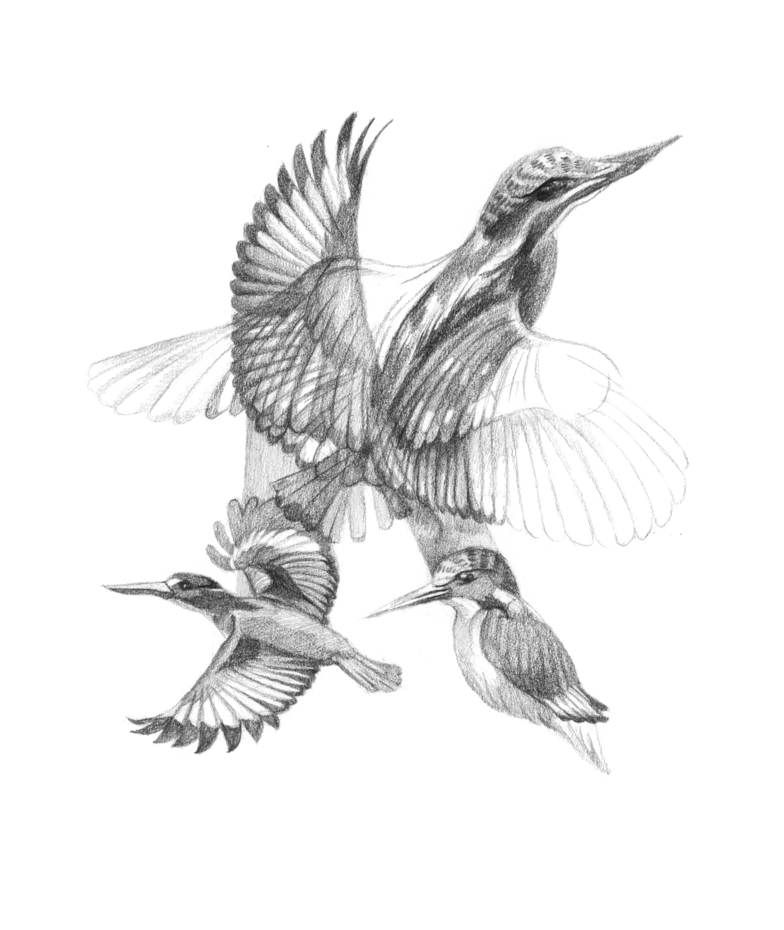 K-is-for-kingfisher.jpg
