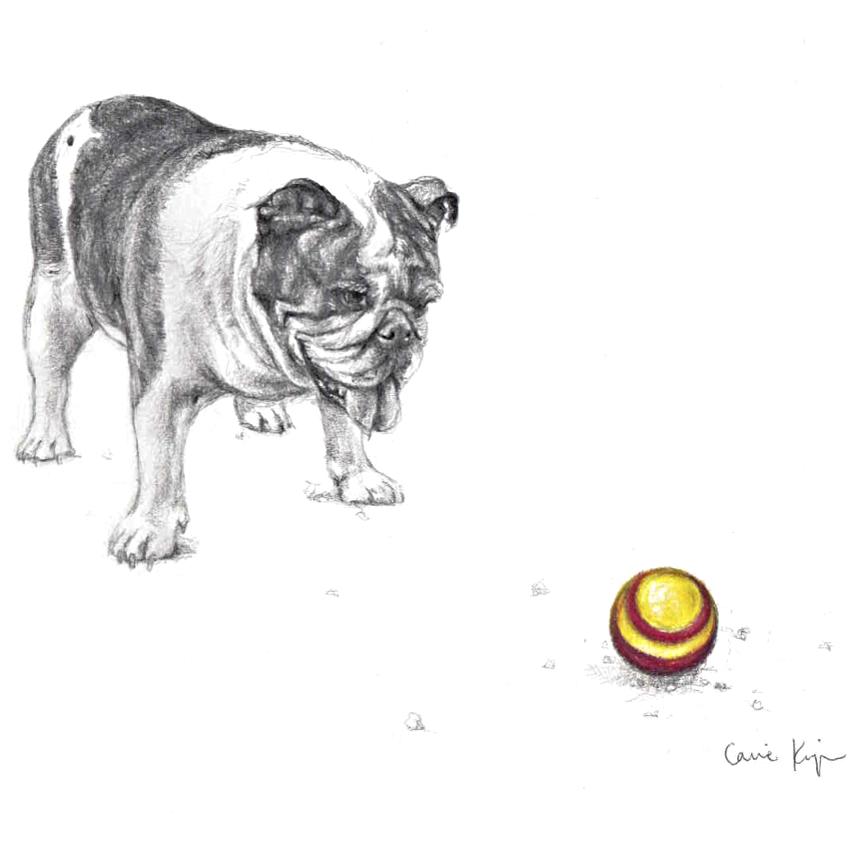 Bulldog and Ball PNG.png