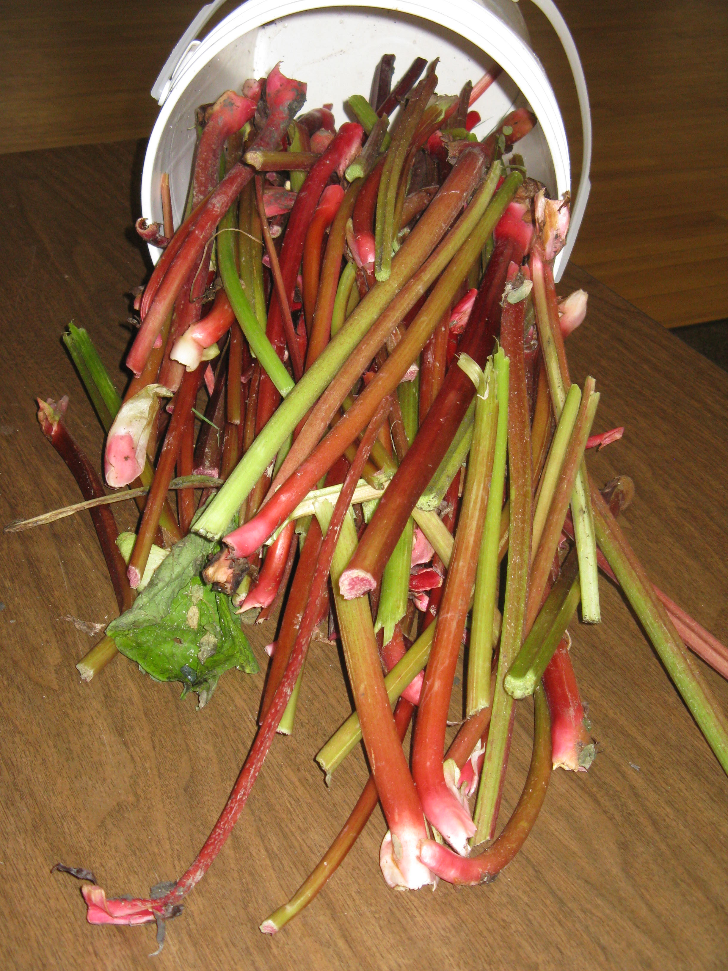 Fresh Rhubarb ready for a wash and trim