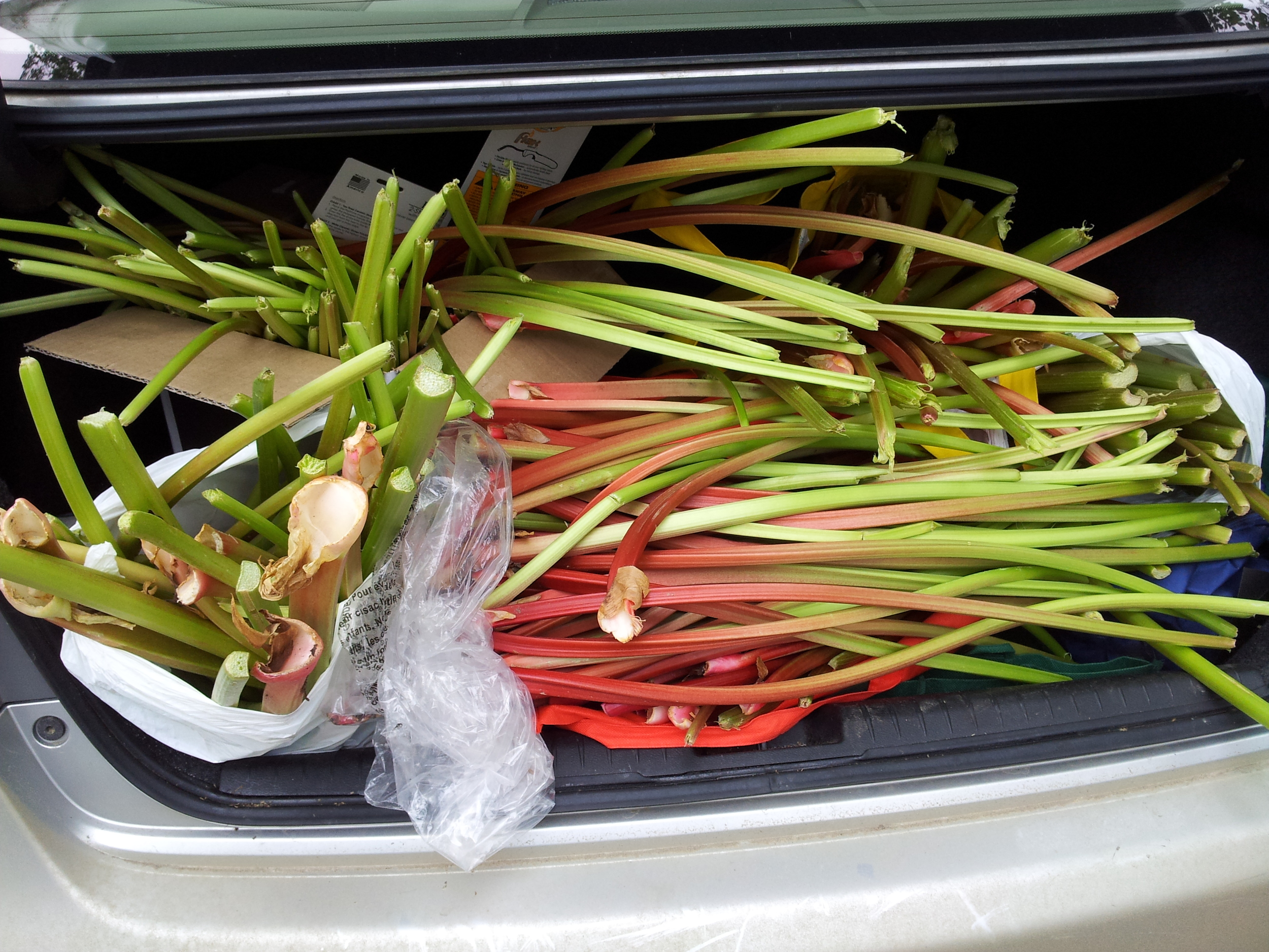 Driving around the city to pick up our rhubarb