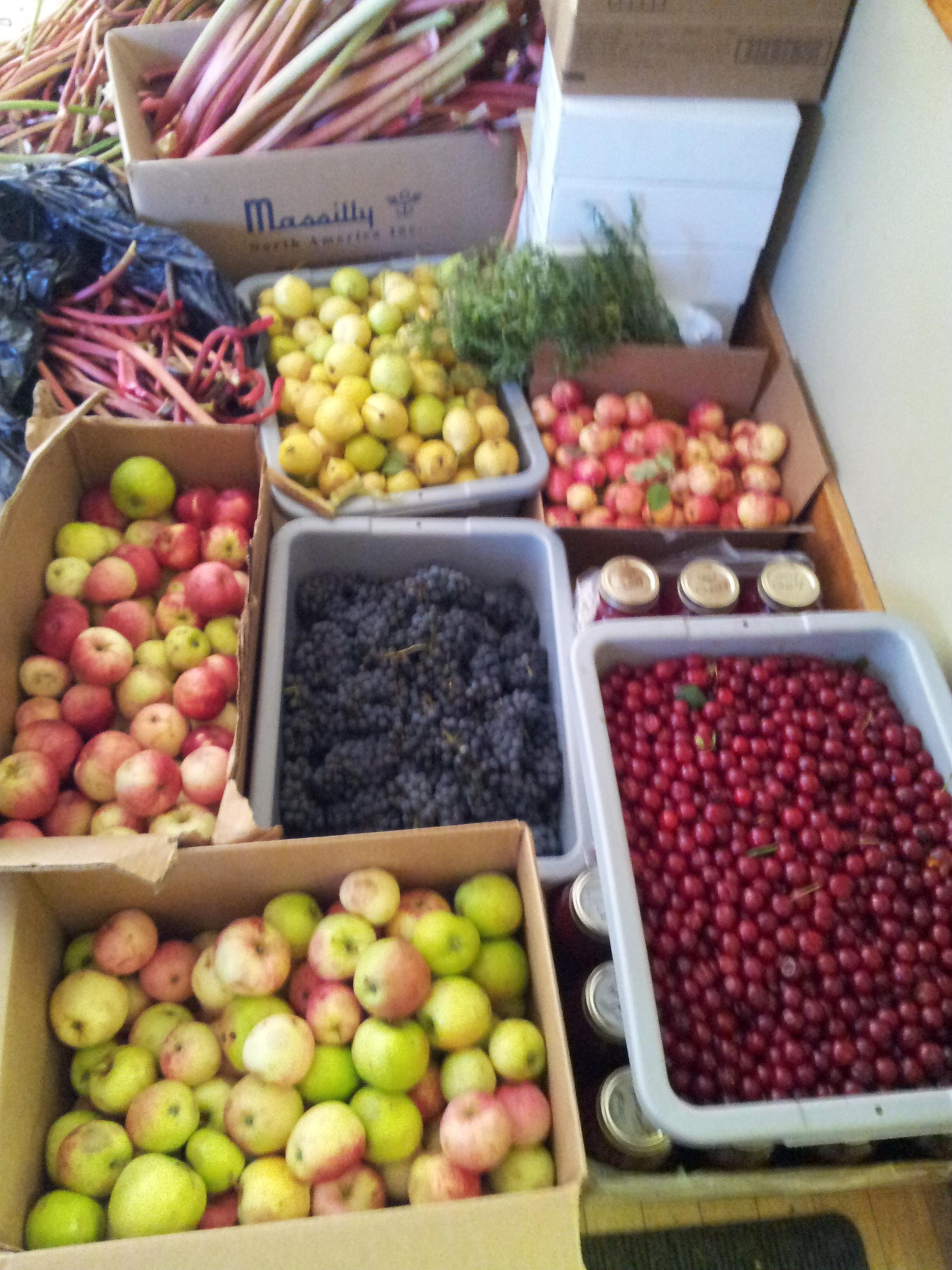 Abundance in September.jpg
