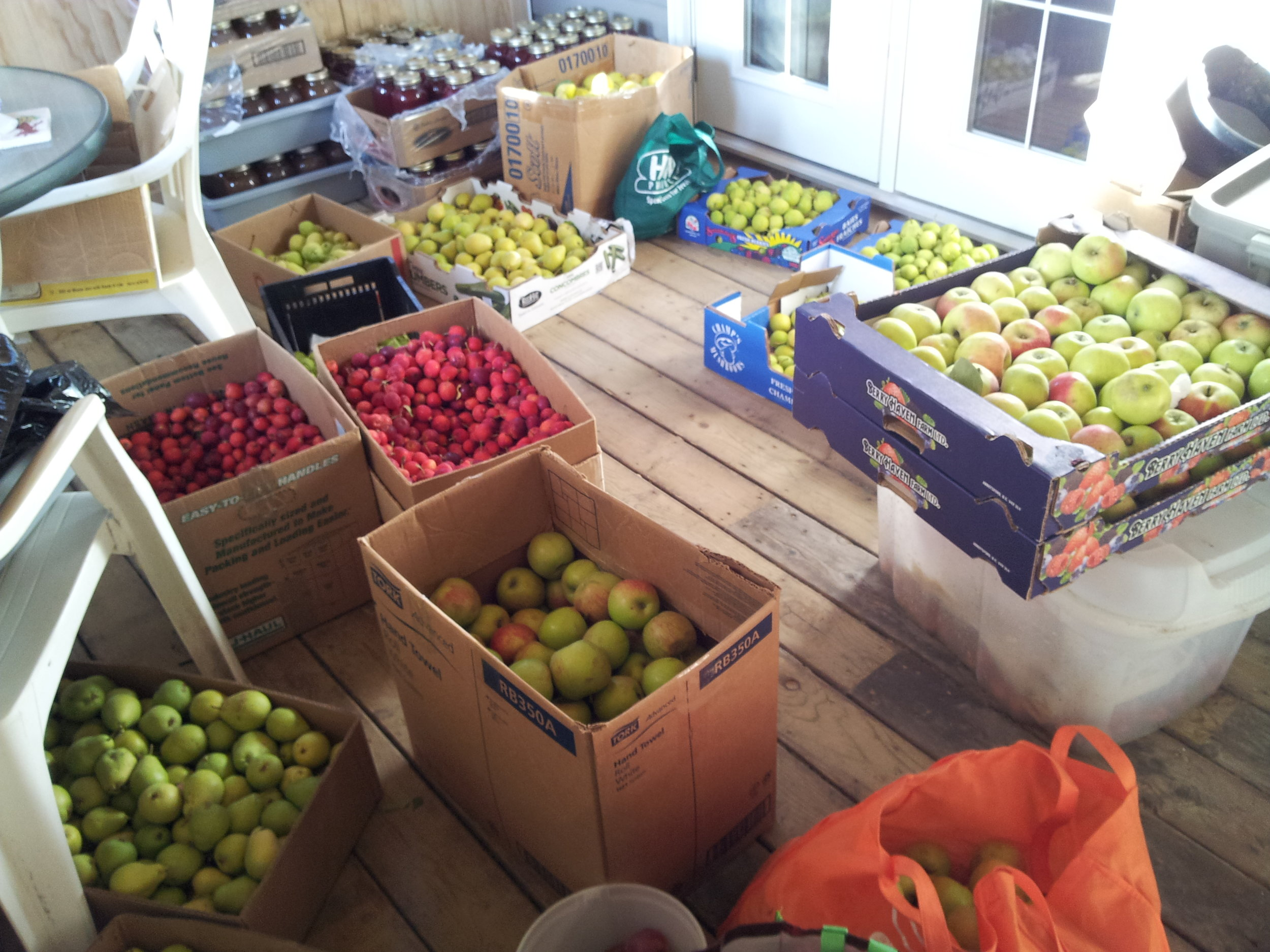 Pears, apples and crabs - fall 2012.jpg