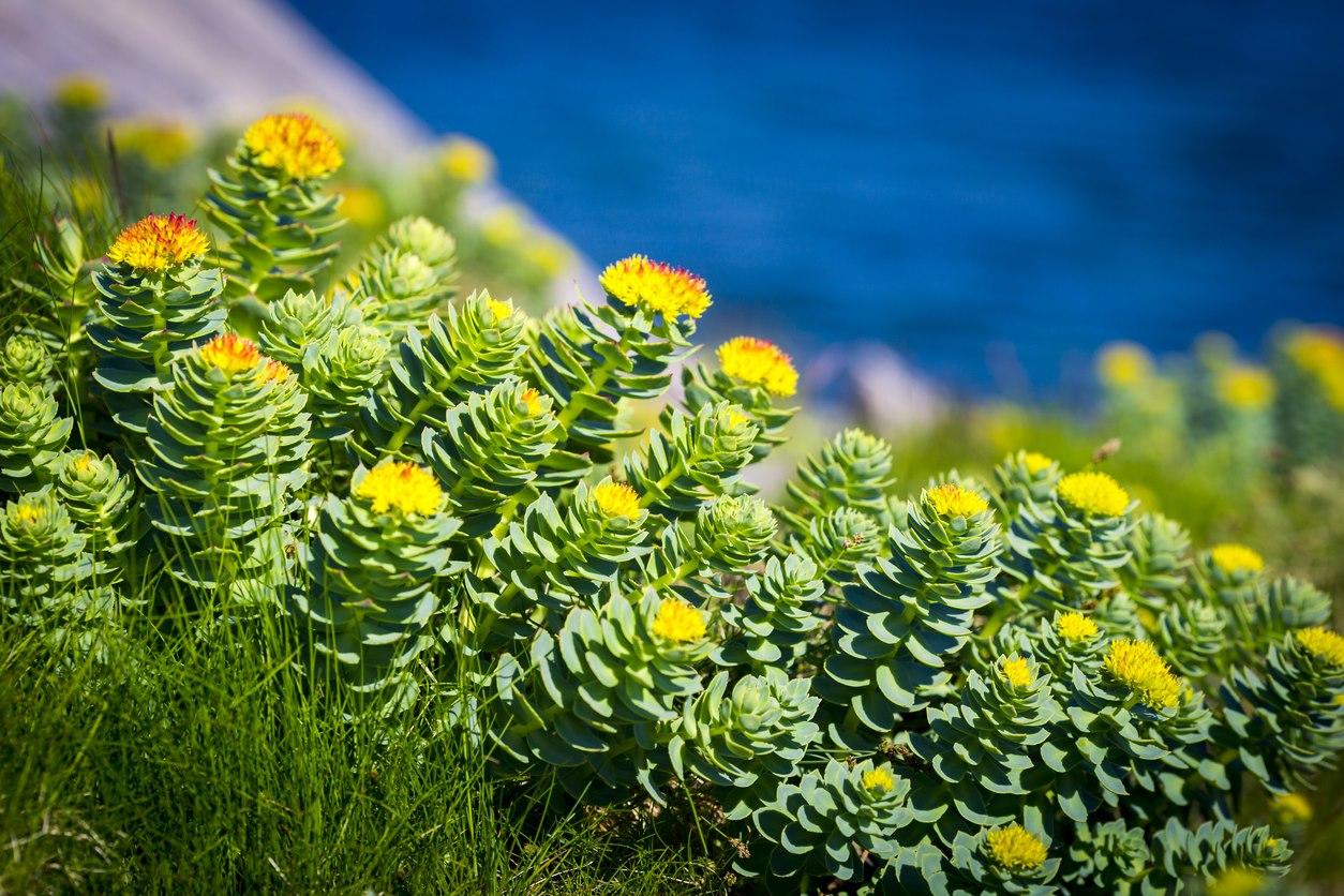 Image taken from Gaia Herbs website