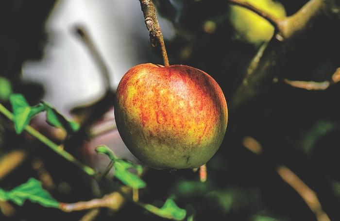medical-medium-apples.jpg