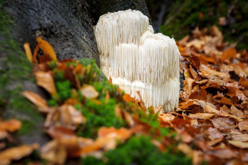 mushroom-medicine.jpg