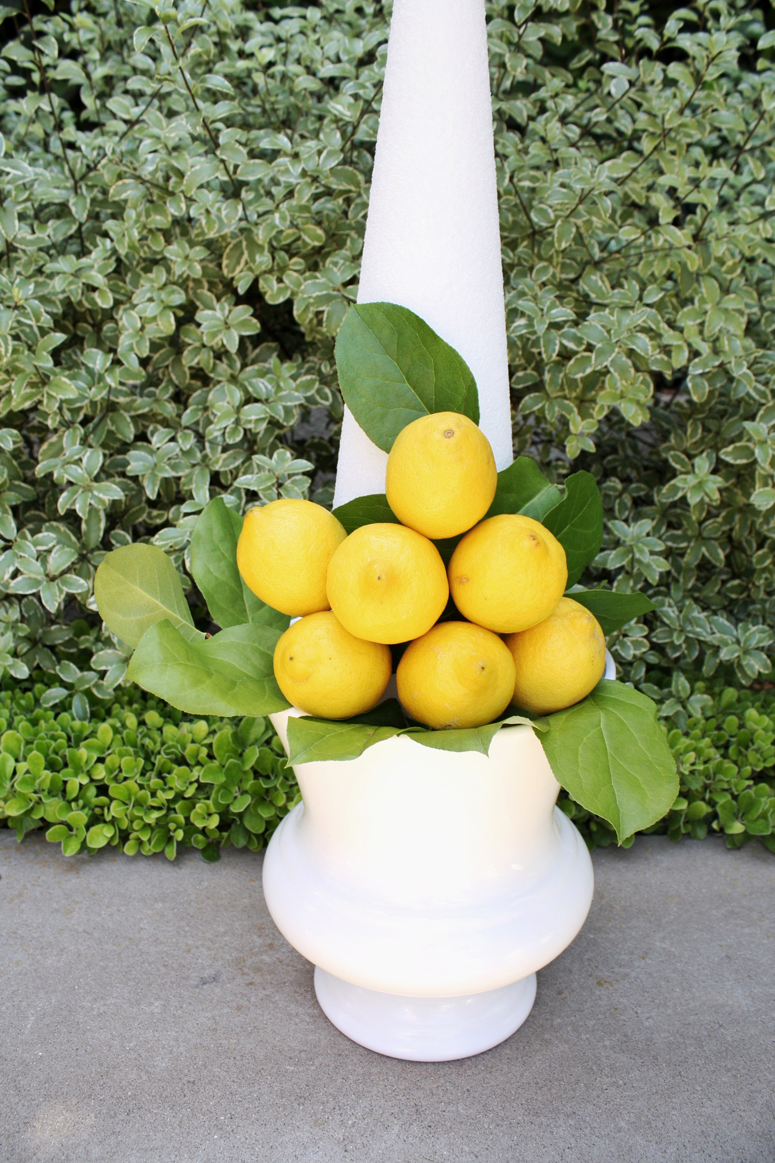 Lemon Topiary How To