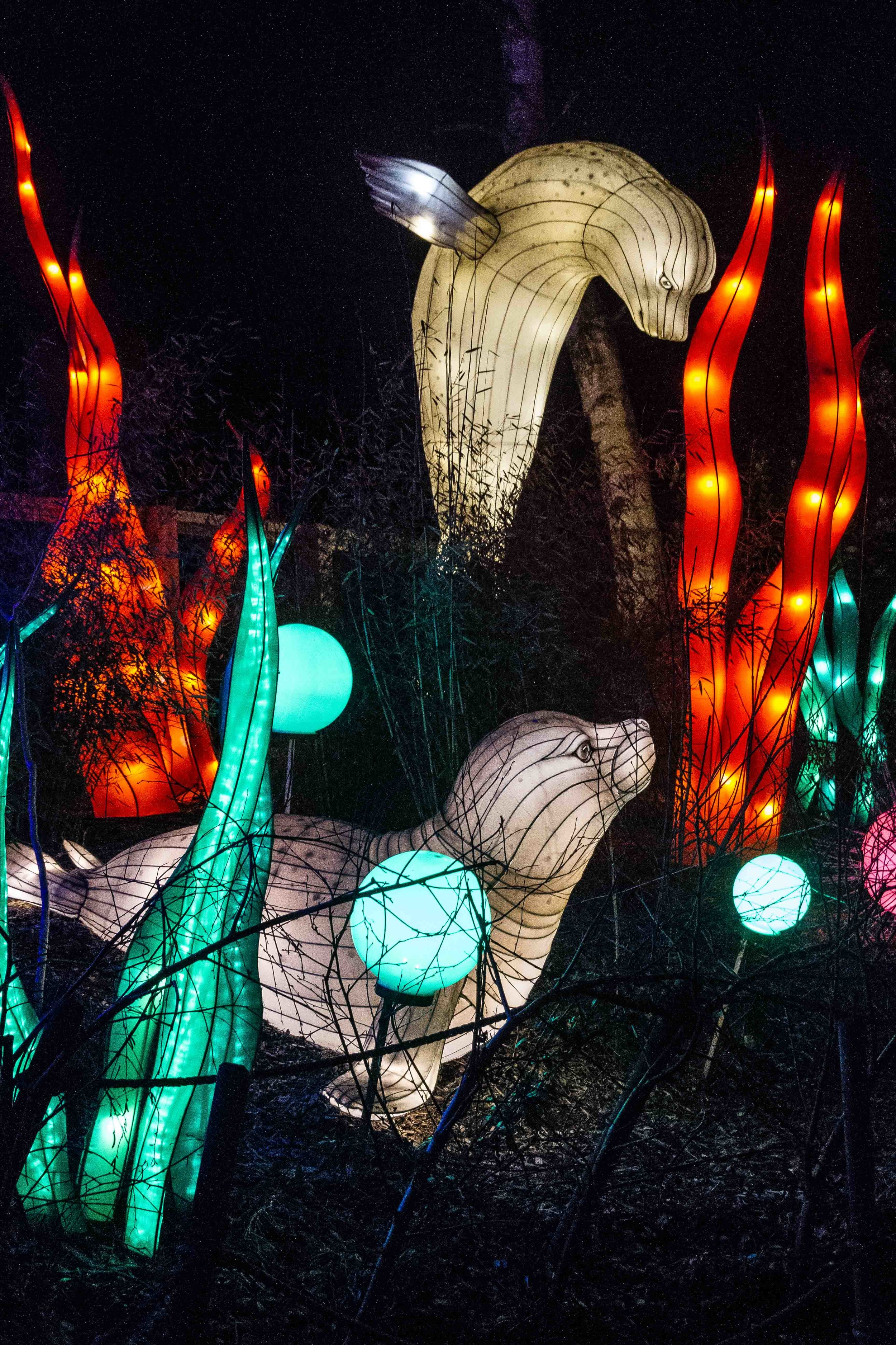 Wild-Nights-Dublin-Zoo (9 of 75).jpg