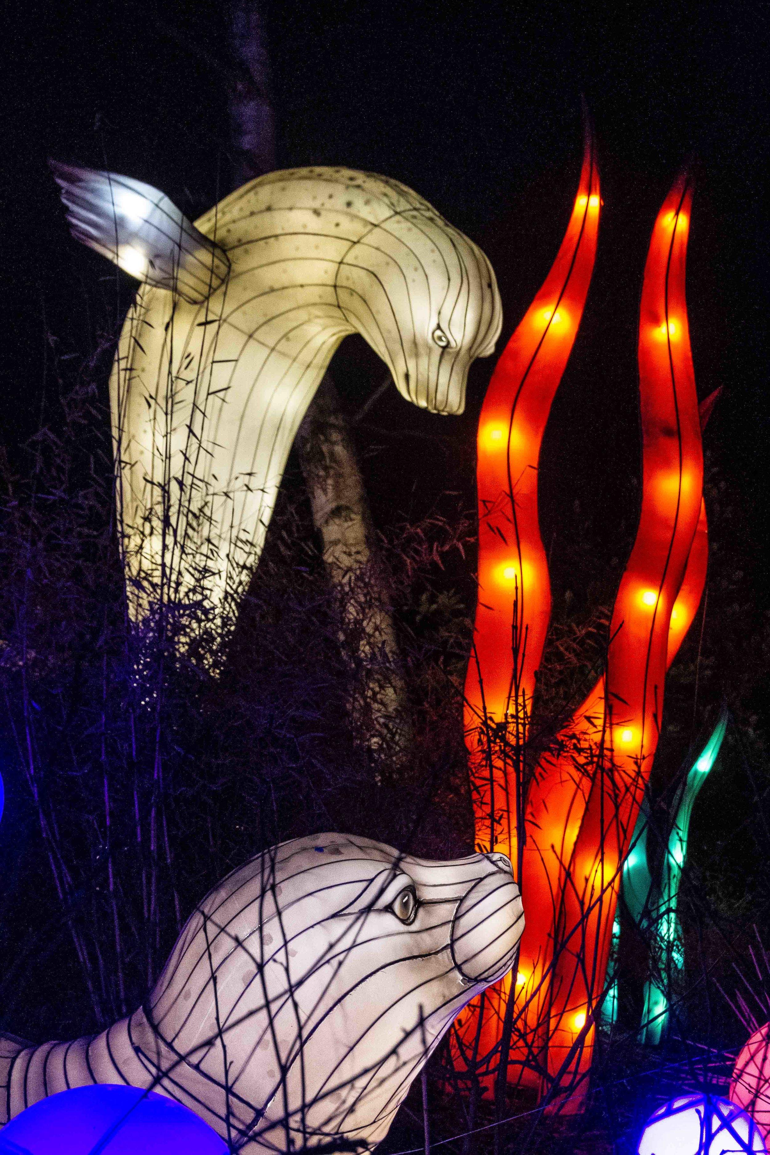Wild-Nights-Dublin-Zoo (10 of 75).jpg