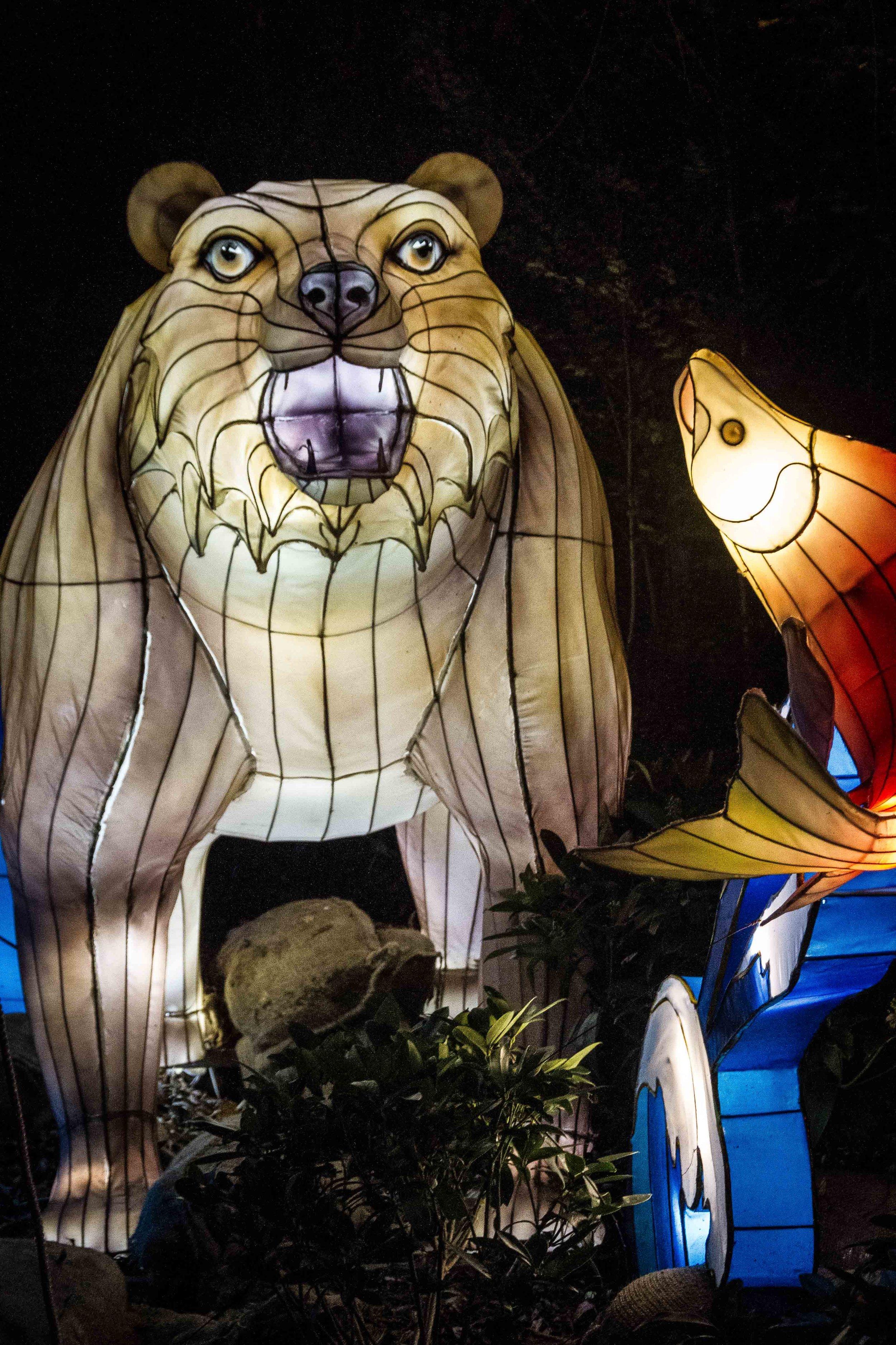 Wild-Nights-Dublin-Zoo (14 of 75).jpg