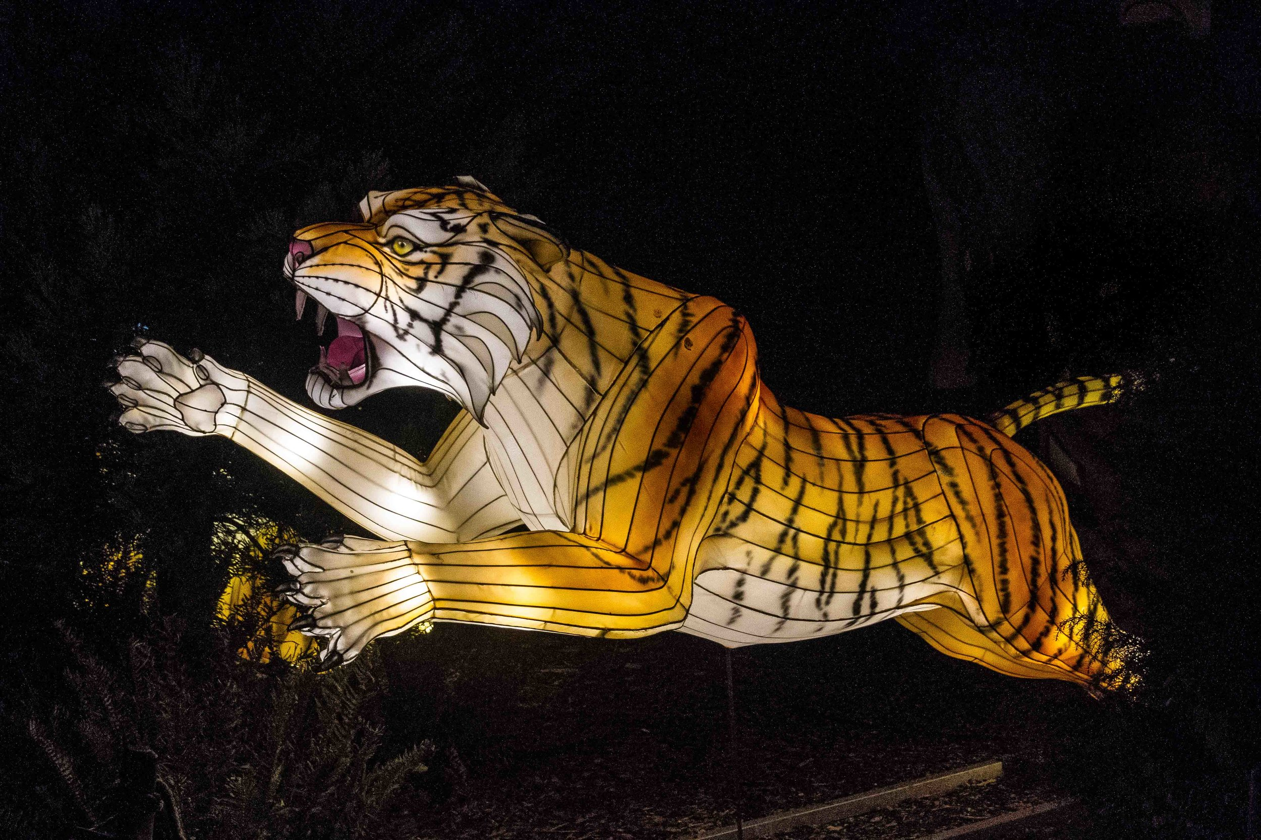 Wild-Nights-Dublin-Zoo (27 of 75).jpg