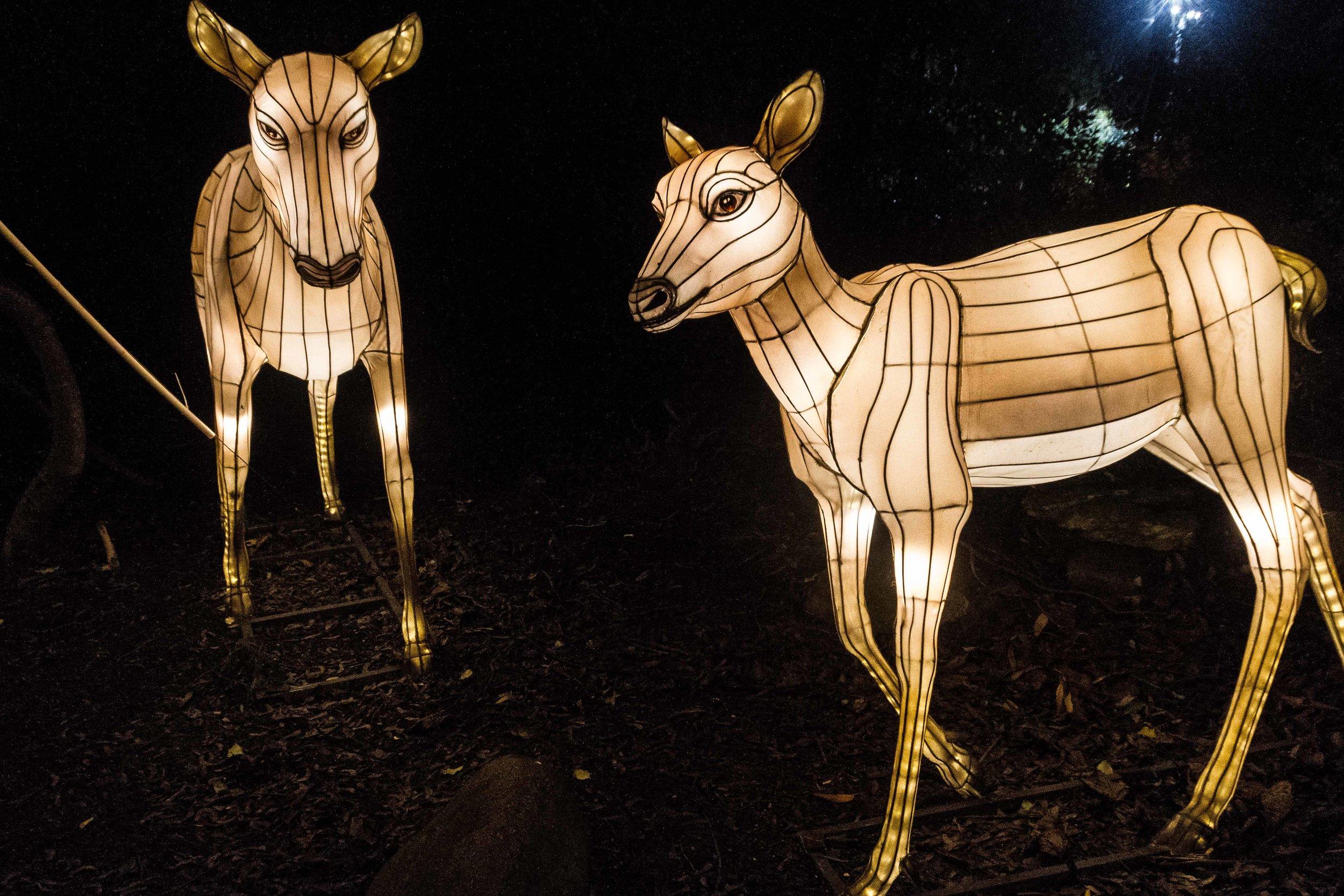 Wild-Nights-Dublin-Zoo (30 of 75).jpg